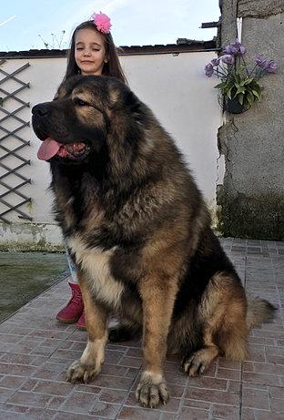 Lion Balkan Master   C...