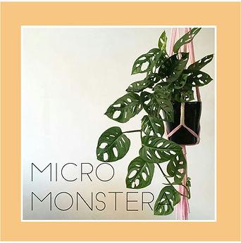 micro monstera-01.jpg