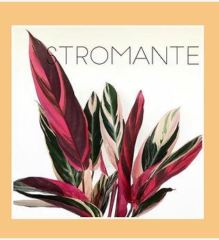 stromante-01.jpg