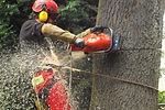 Elagage Abattage d'Arbres par Beaudier Jardinier Paysagiste à Irigny Rhone 69