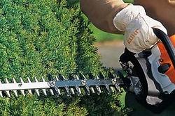 Taille des Haies par Beaudier Jardinier Paysagiste à Irigny Rhone 69