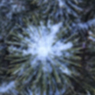 snow in evergreen copy.jpg