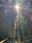 sun in the woods copy.JPG