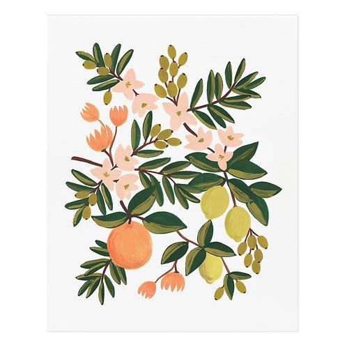 Citrus Floral Art Print