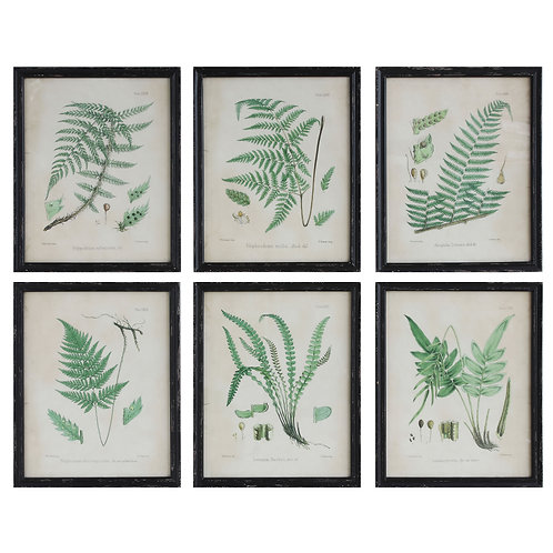 Fern Reproduction Images in Wood Frames (Set of 6 Designs--Each Sold Seperately)