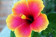 Martinique, fleurs et arbres