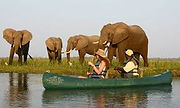 Zambezi, safari agua