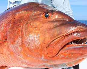 cua pesca colômbia