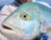 cuca pesca panam
