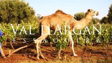 Le Maroc terre de grands vins