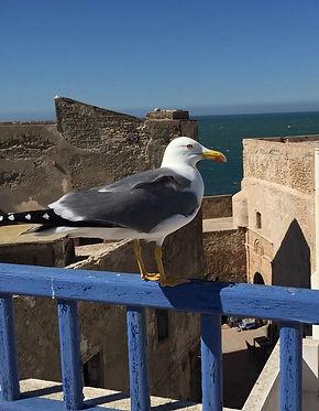 riad le consulat vue mer Skala Essaouira