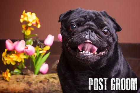 post groom.jpg