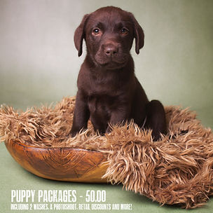 puppy packages.jpg