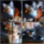 17-11-18-4242.jpg