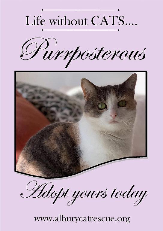 purrposterous1.jpg