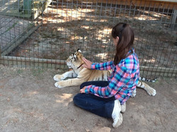 Tiger Petting 2014