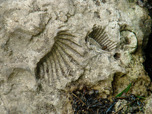 Members Fossil Hunt