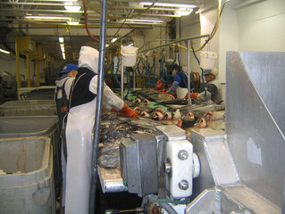 Ergonomic Training for Seafood Processing Workers