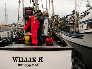 U.S. Coast Guard Releases Voluntary Safety Initiatives and Good Marine Practices for Commercial Fish