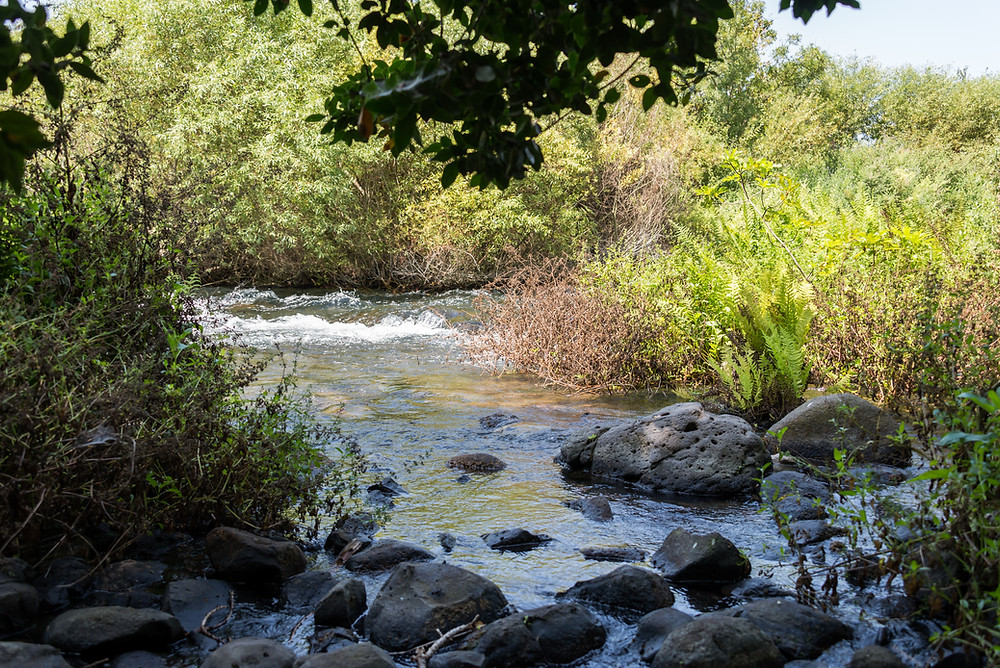 Dan Stream tributary of the Jordan River at Tel Dan