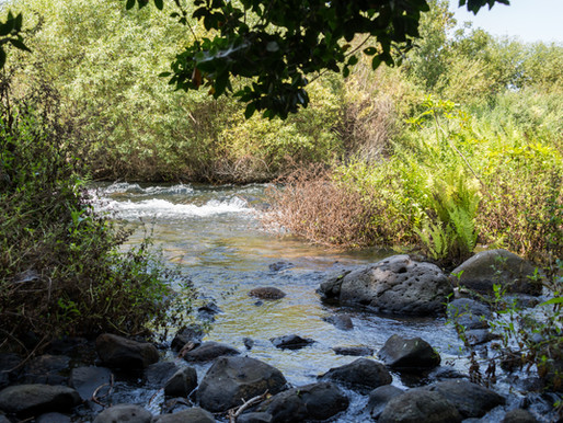 My Favorite Nature Reserve