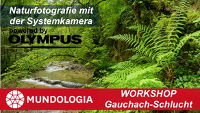 Workshop Gauchach