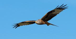 Vogelfotografie mit der E-M1 MkII