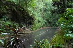 jamaica-get-away-travels-fern-gully