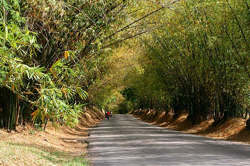 bamboo_avenue