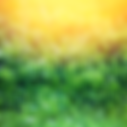 grassy background.thrive.png