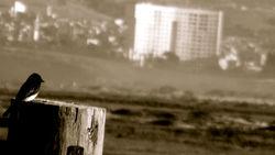 phoebe on stump 4