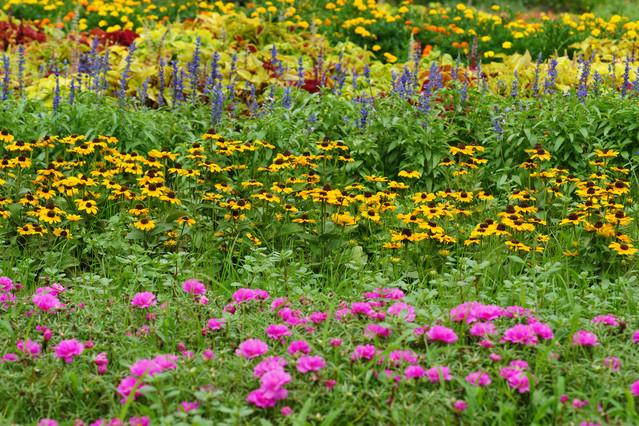 さまざまな花々が美しい