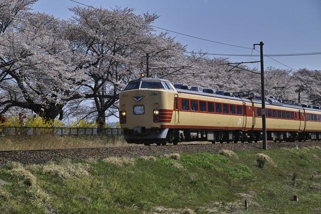 幸福なキャリアの象徴として、桜と特急