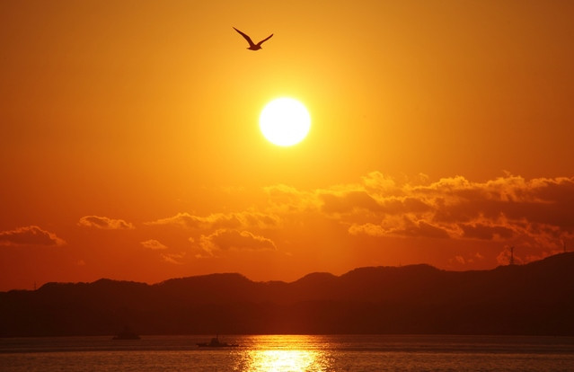 夕日に向かって飛ぶ