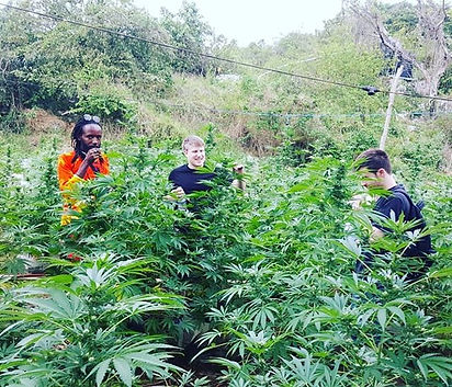 #ganjatours #420toursJA #jamaica #negril