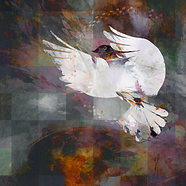 01dove2.png