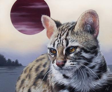 Leopard-cat-small-sized-.jpg