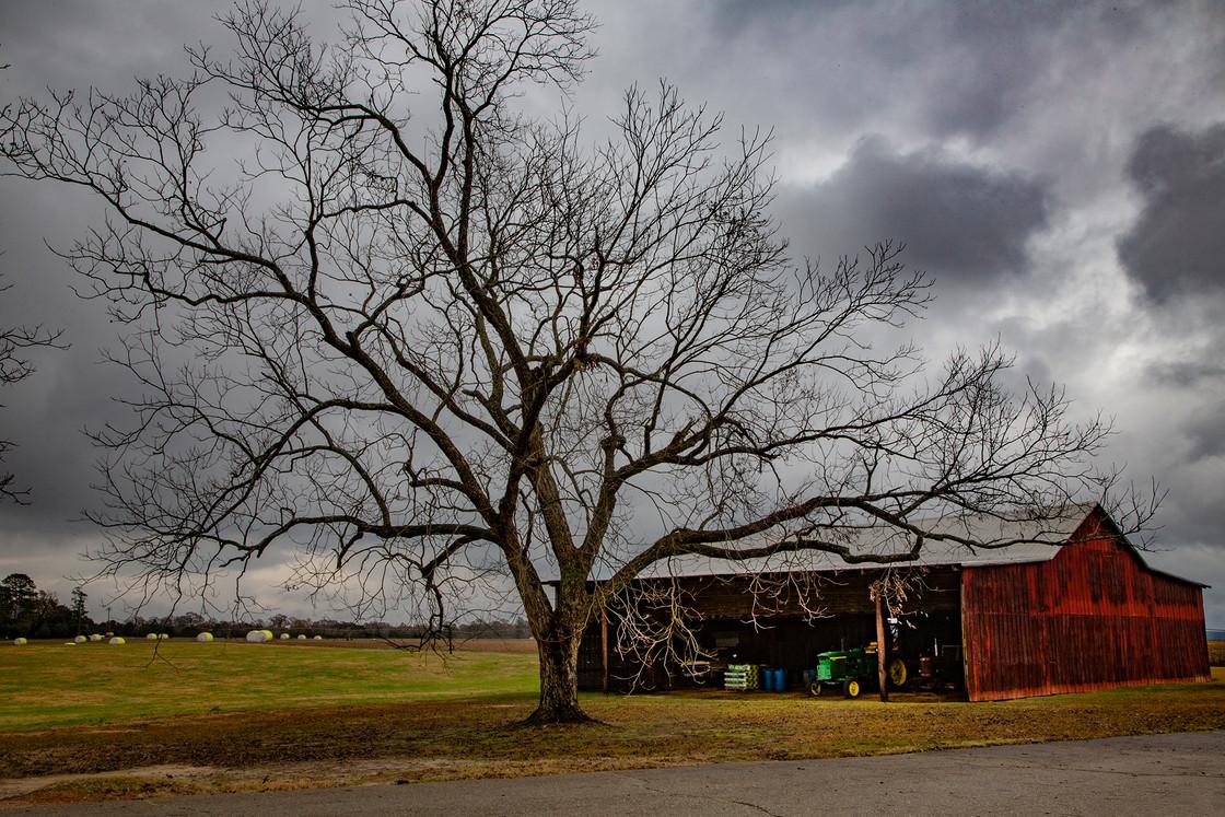 Pecan Tree, Perry, Georgia