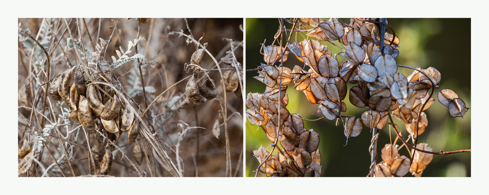 Fall Seed Pods