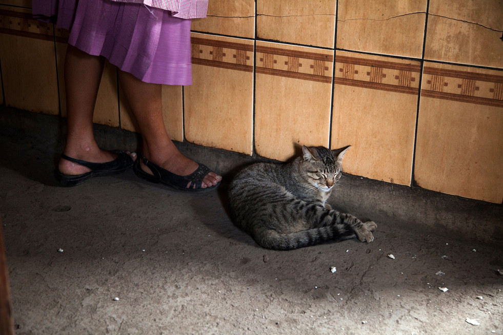 Kitchen Cat