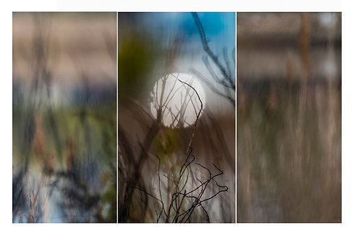 Dawn in Quinnipiac Meadow (triptych)