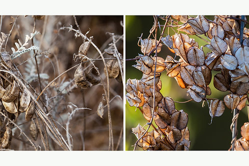 Seed Pods (diptych)
