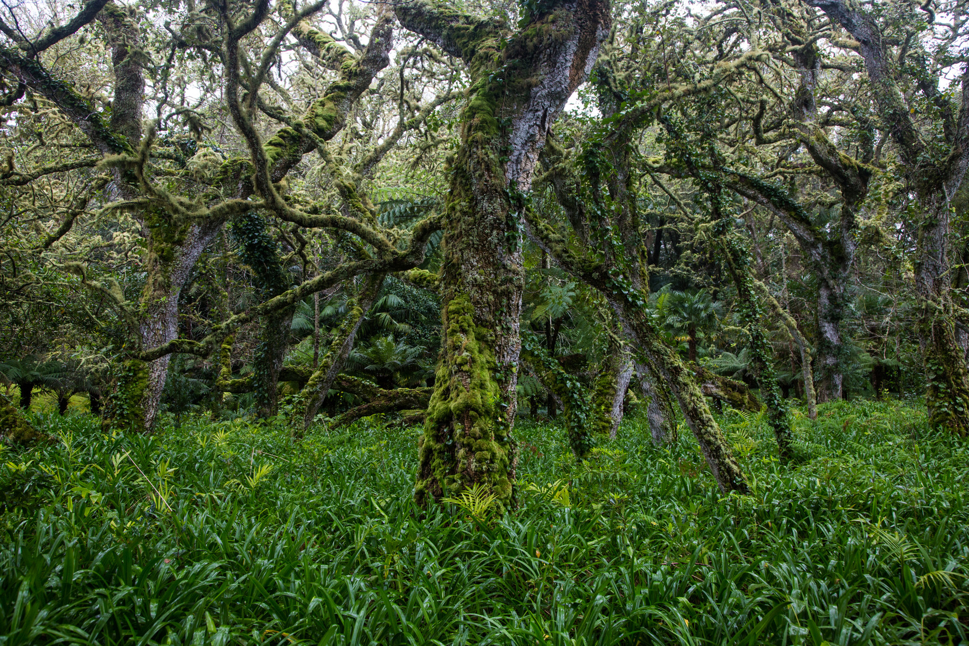 Forest in Furnas