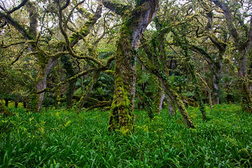 Ovid's_Forest_SaoMiguel-6124-Final.jpg
