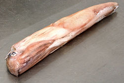 Squid 2.jpg