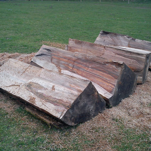 tree trunk quartered