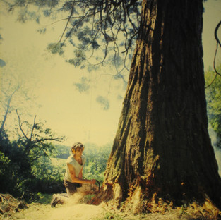 early years...logging california redwoods