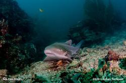 shark point4