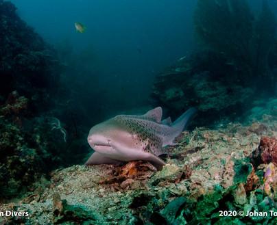 shark point4.jpg
