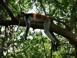 Zanzibar-Jozani_Forest3.jpg